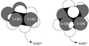 Hydride transfer rotamers of Gal E illustrated