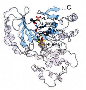 Ribbon diagram for free radical mechanisms in enzymology