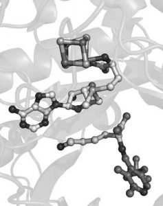 figure showing the active site of lysine 2,3-aminomutase